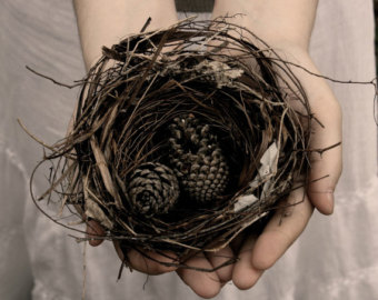 bird nest 3