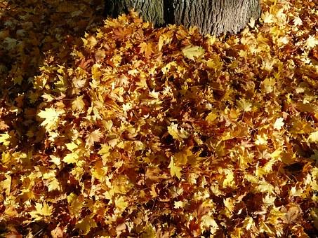 leaves-62818__340